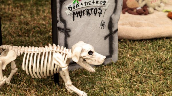 The Meaning of the Day of the Dead is Changing - UT News - UT News