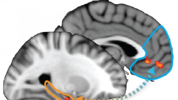 hpc_pfc_brain
