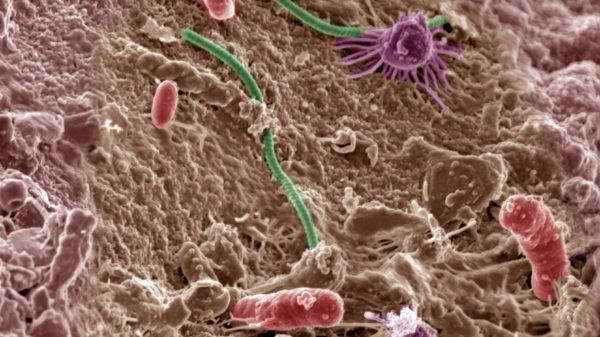 soil_microbes