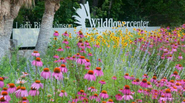 lady_bird_johnson_wildflower_center