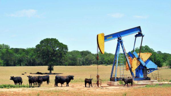 oil_830_0