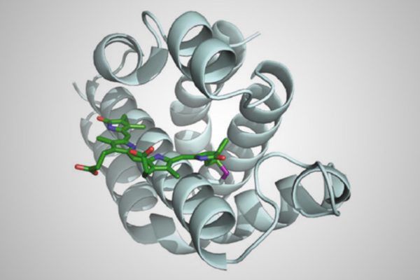 recoded-protein-model
