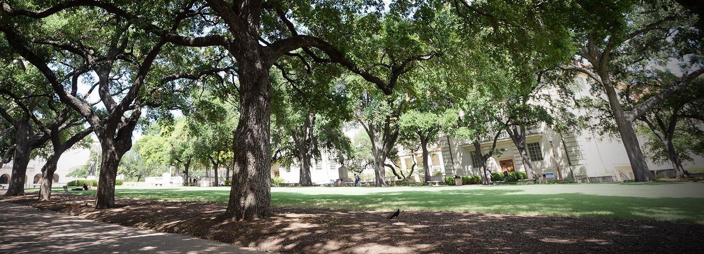 Battle oaks