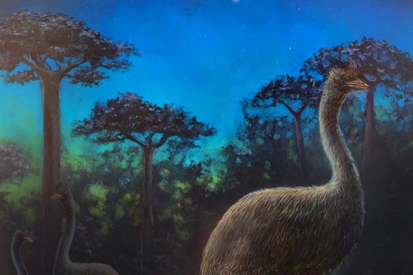 Elephant bird, artist's rendering