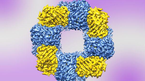 Protein Nanostructure