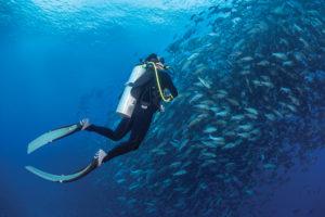 A UT researcher swims alongside a school of fish.