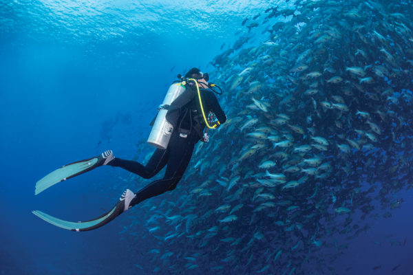 A UT researcher swims alongside a school of fish.