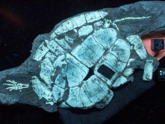 Fig.-6B-Ashfall-turtle-UVA-filter_-e1559227918198