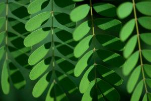 Geometric pattern of oval, green leaves by the Steve Hicks School of Social Work.
