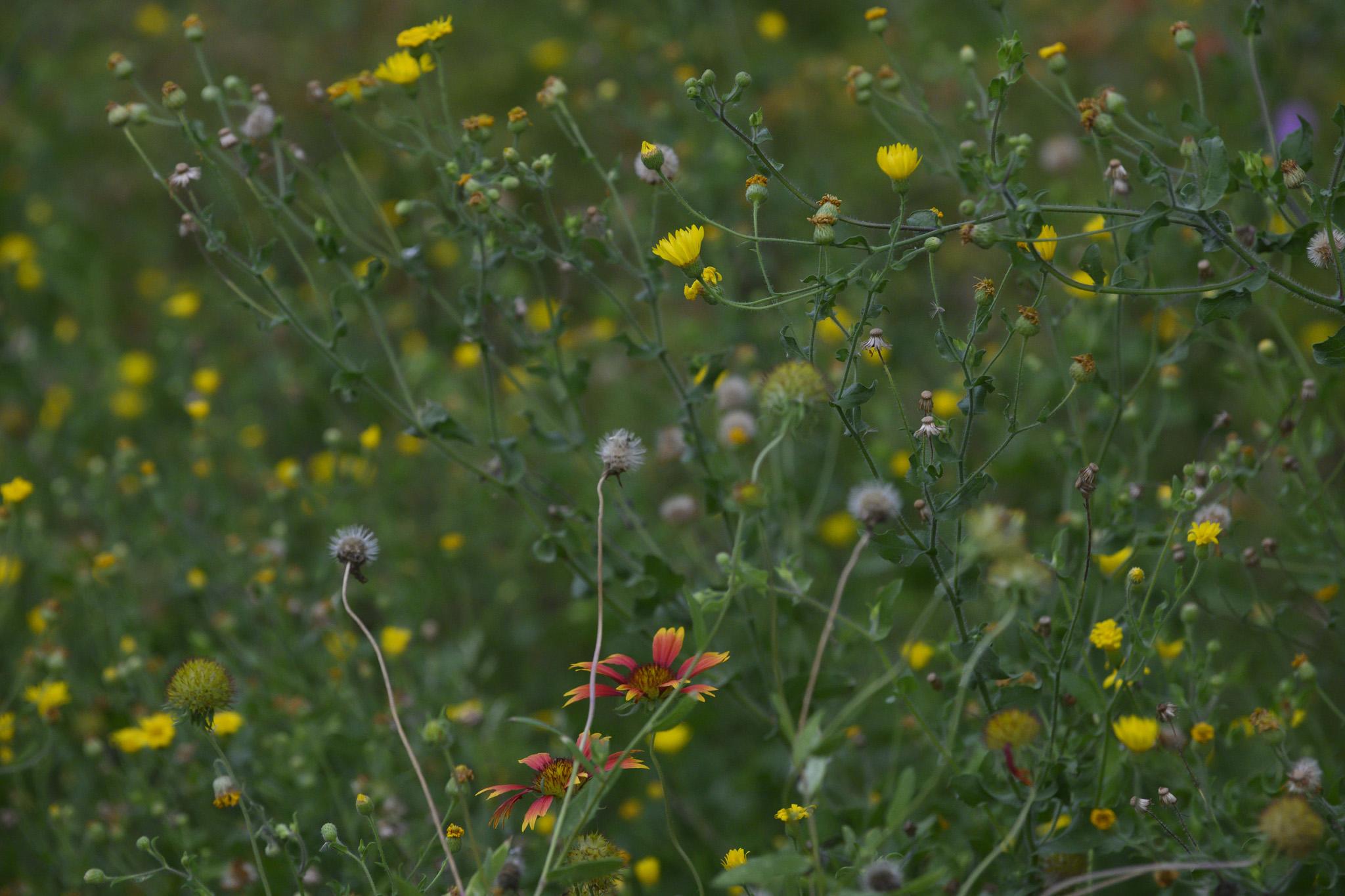 Field of wild flowers.