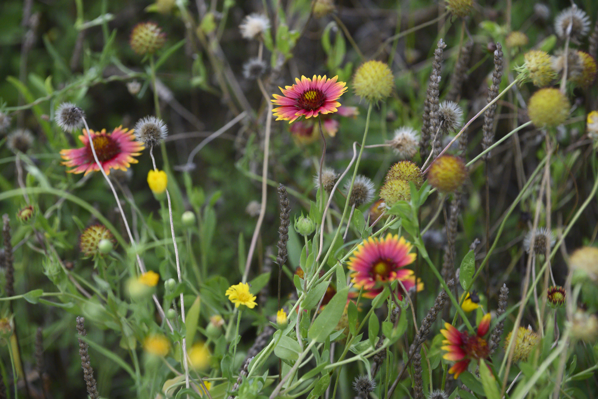Wildflowers in the research field.