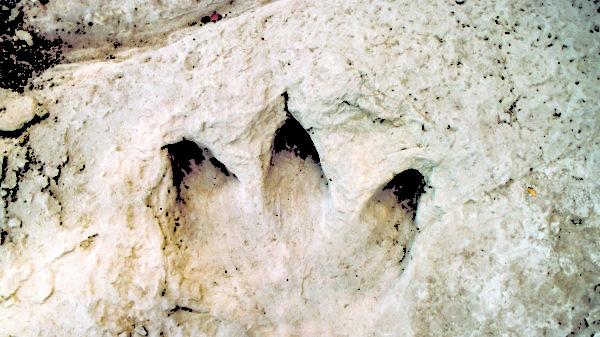 Dinosaur Vally State Park, Tracks,