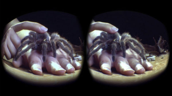 A tarantula crawls up someone's hand as viewed through the lens of a virtual reality device. Image by The University of Texas at Austin