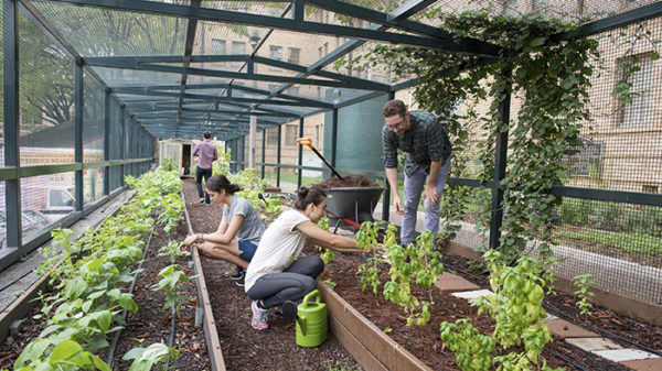 Photo of people working in a garden