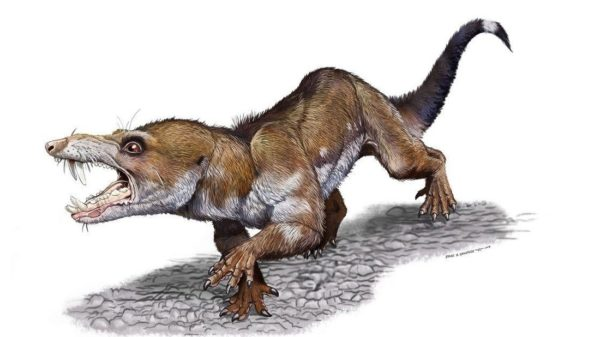 A drawing depicting the fanged Triassic Age squirrel. Illustration by Jorge A. Gonzalez.