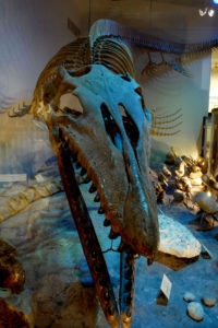 The Onion Creek Mosasaur
