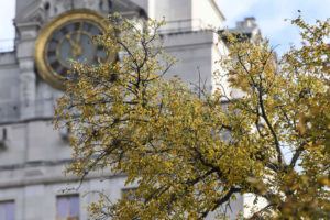 A close-up of the Tower clock and a branch of tree with golden leaves.