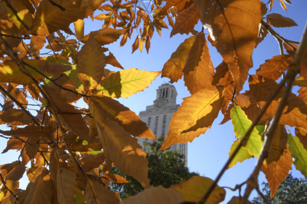 The top of the Tower seen through a cluster of burnt orange leaves on a tree beside the turtle pond.