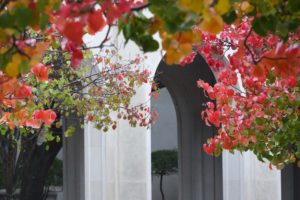 Bright red leaves frame the arches at the Law School.