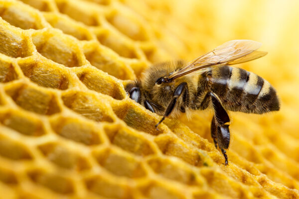 bee-research-1400px
