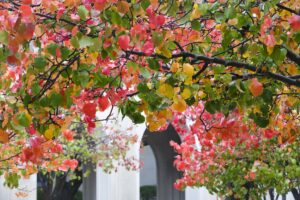 Fall color 2019 at the Law School
