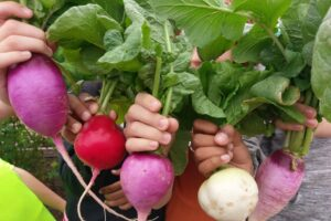 Students show off radishes and beets grown as part of a school garden project.