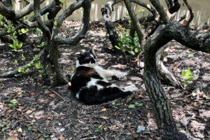 Domino the cat