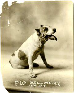 Theo Bellmont's dog Pig