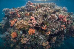 Super Corals